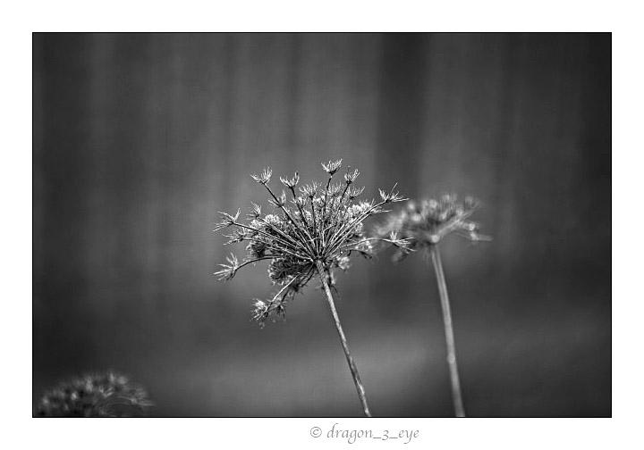 Quiet Seeds