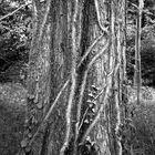 Quiet Trees (3)