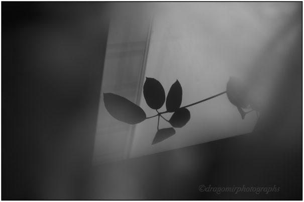 Quiet Window 2