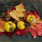 Quitten im Herbst