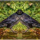 Rabenvogel gespiegelt