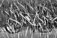 Rad und Kunst  # 9583-9584