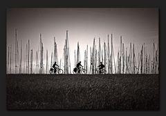 Radeln auf Hiddensee
