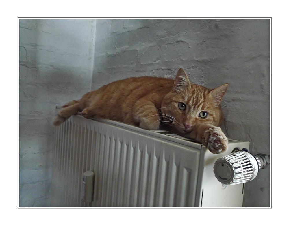 ... radiator ist warm im winter