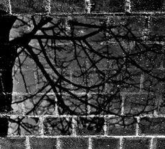 Radici nel cemento