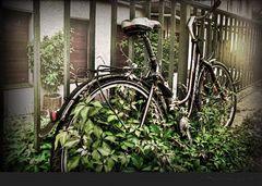 Radtour ins Grüne