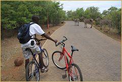 RADTOUR  STORY Zebras kreuzen  Sambia