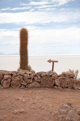 Rätsel: Wo ist der Kaktus?