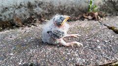 Rätselvogel  II