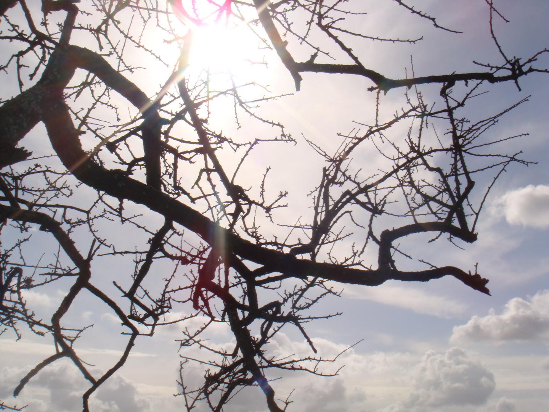 Raggio di sole fra i rami