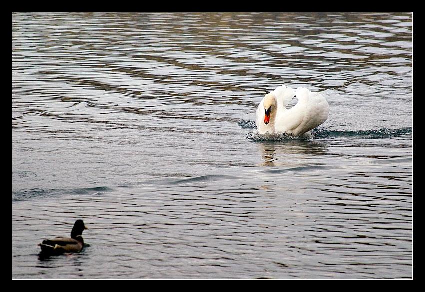 Raging Swan...