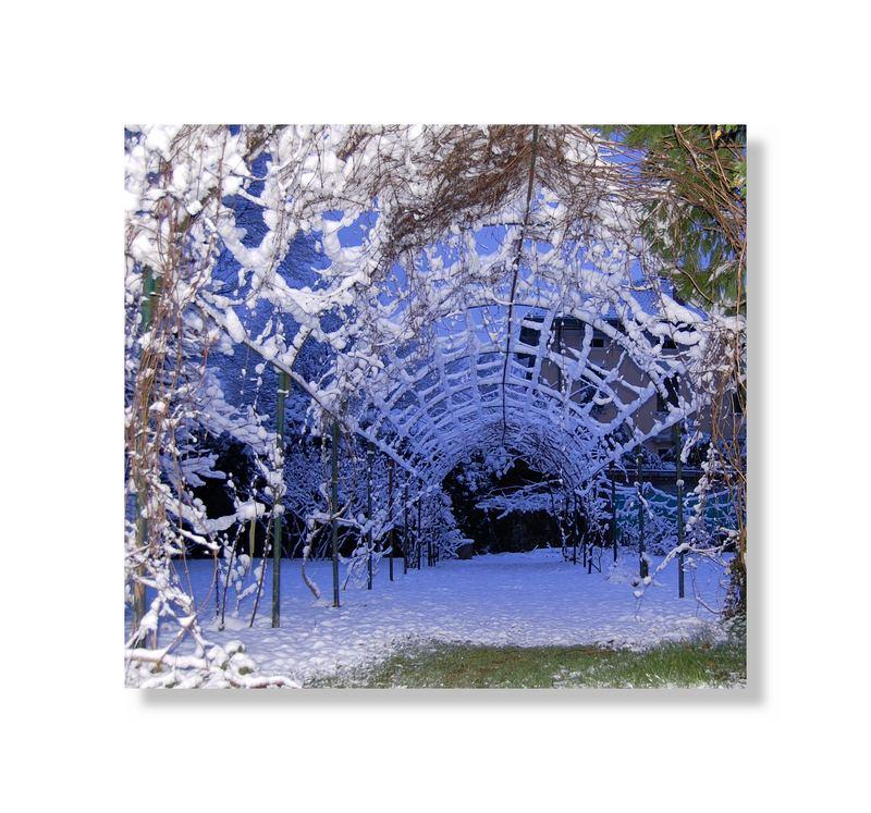 ...ragnatela di neve...