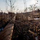 rails abandonnés