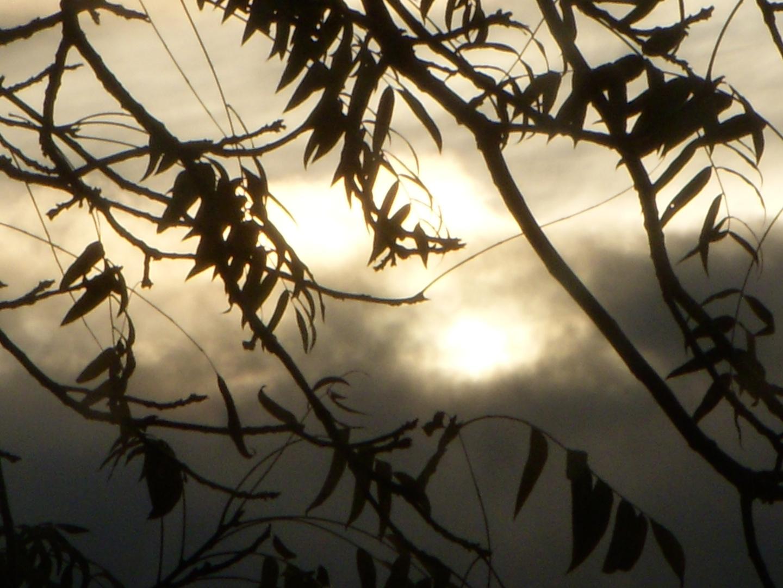 """Rain Clouds through the Walnut Branches"""