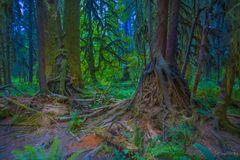 """Rain forest"""