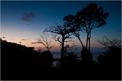 [ Rain Forest...]
