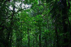 Rain Forest on Domenica