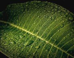 Rain on the Leaf