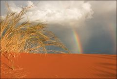 rainbow meets Grasbüschel