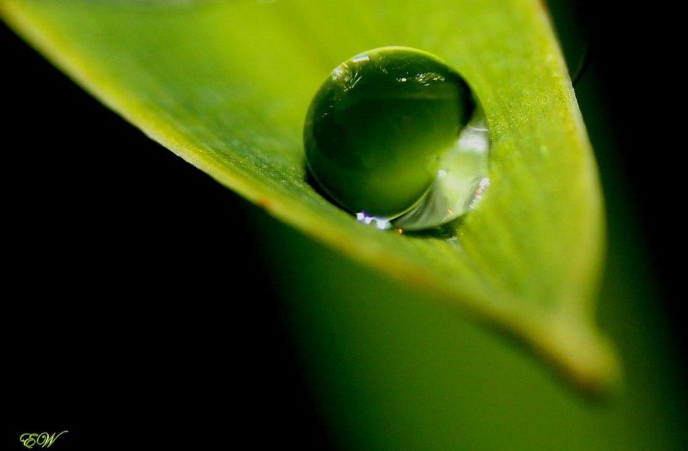 raindrop...