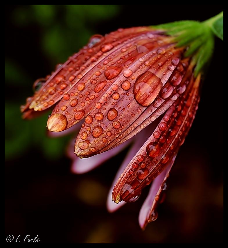 *** raindrops ***