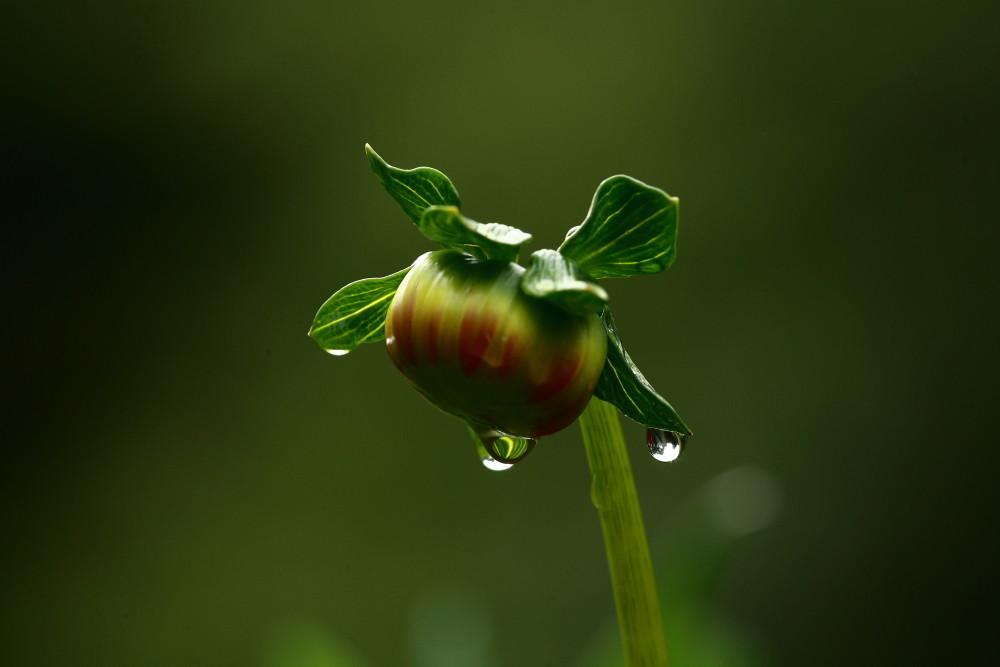 Raindrops von Mahmud Akhtar