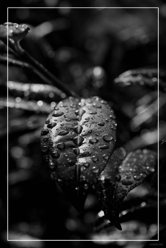 """""""Raindrops"""""""