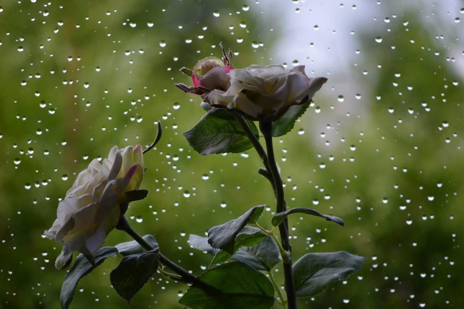 Raindrops for the flower
