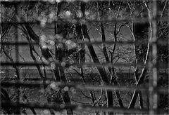 Raindrops on the Windows