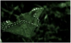 Raindropsymphony