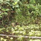 Rainforest Lagos Coastline