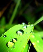 Raining on Bambu