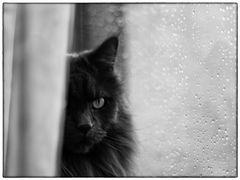 *rainy day*