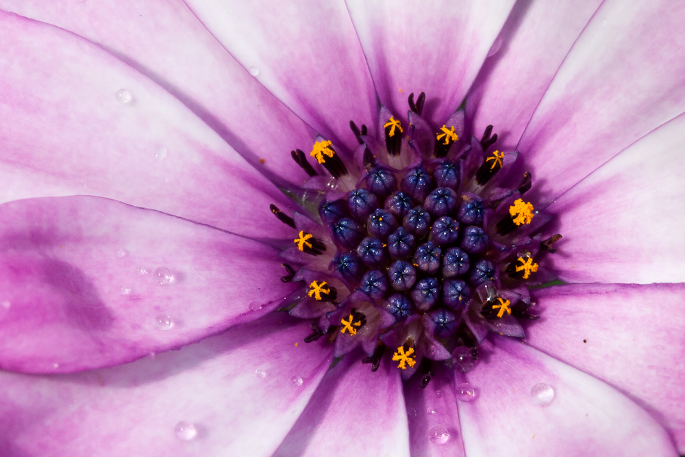 rainy days (psychedelic summer 1.0)