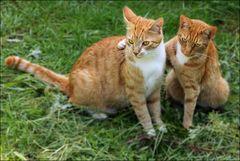 Ralf und Jos