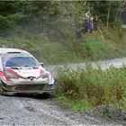 Rally World Champion 2019