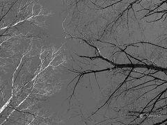 Ramas, en blanco y negro