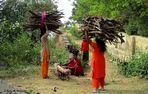 Ramasseuses de bois en Inde
