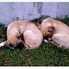 randagi : riposo di due fratelli