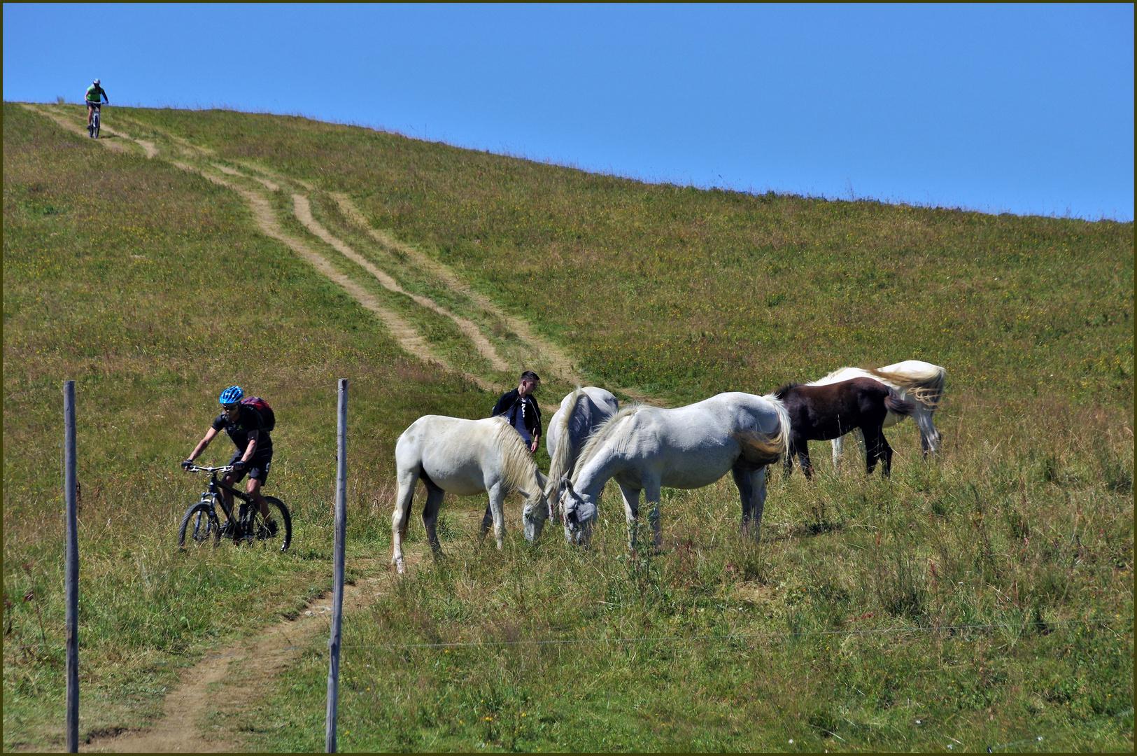 randonnées à pied, à cheval, en VTT...
