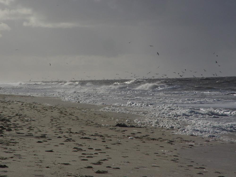 Rantum Strand ; Sylt im Winter