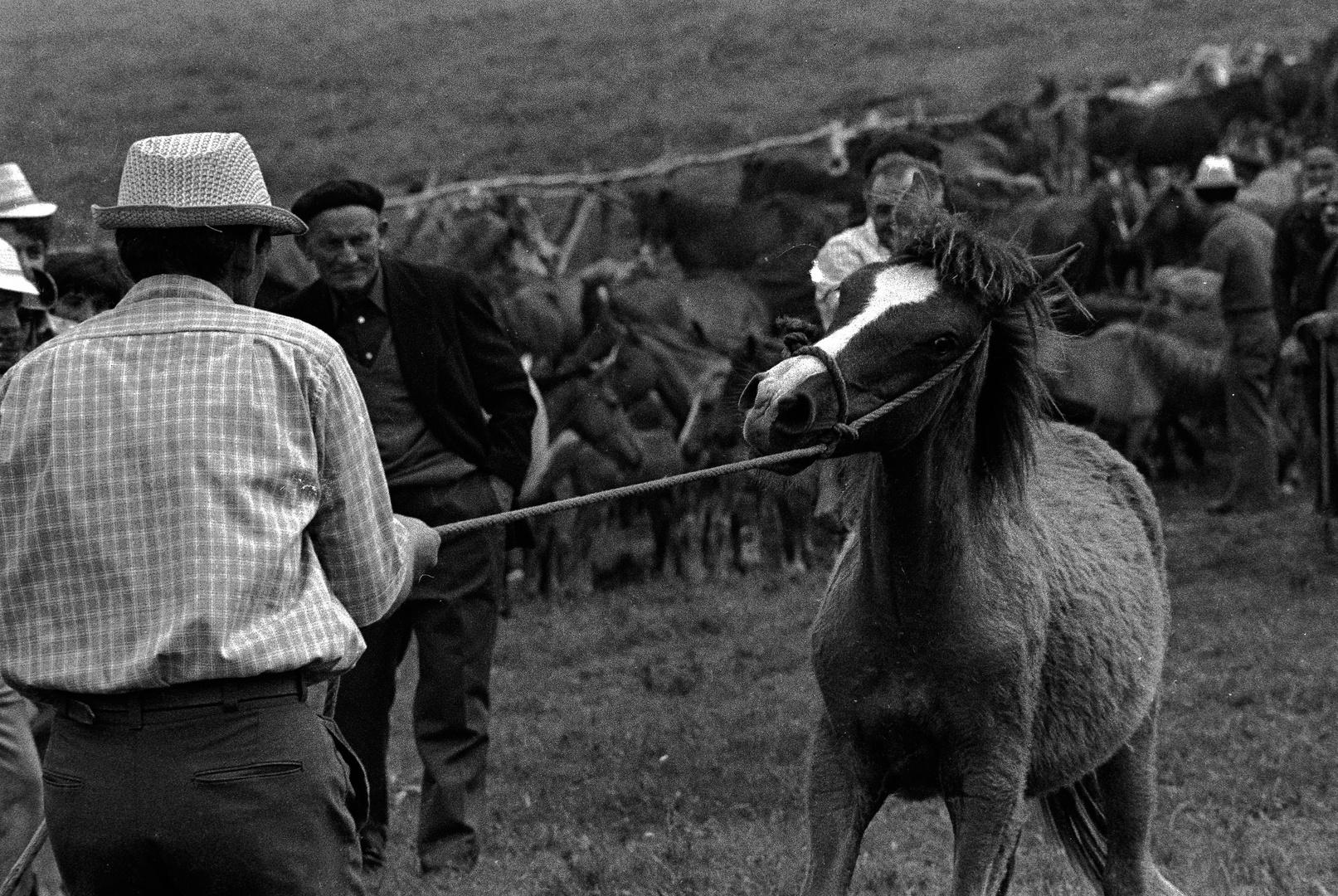 RAPA DAS BESTAS.Candaoso.1970
