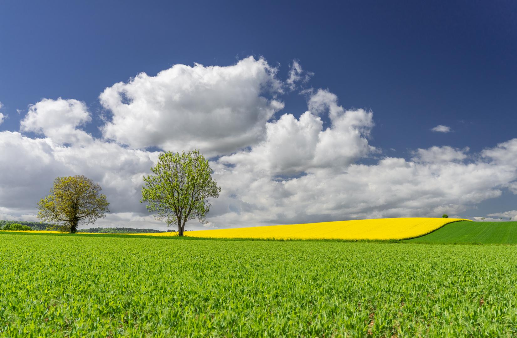 Raps mit Baum, Himmel und Wiese