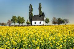 Rapsblüte an der Kapelle bei Mertloch/Eifel