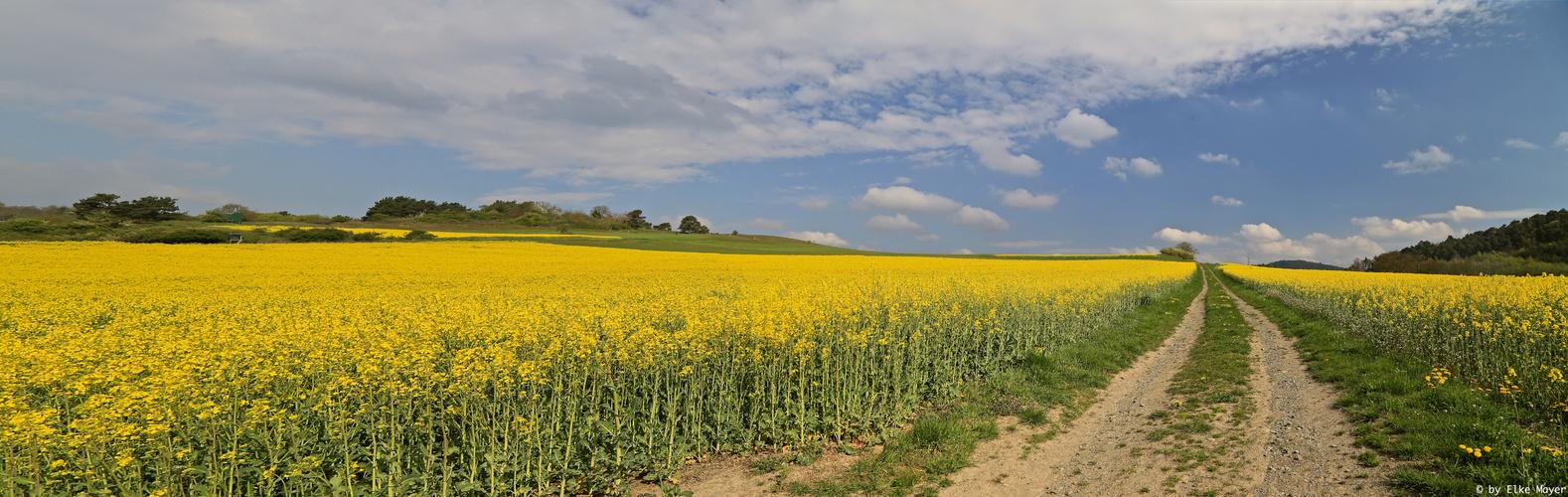 Rapsfeld an Ostern 2014