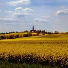Rapsfeld mit Blick zur St.-Urban-Kirche - Wantewitz (Priestewitz)