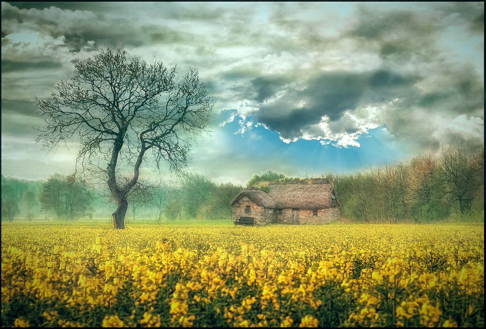 Rapsfeld mit Haus