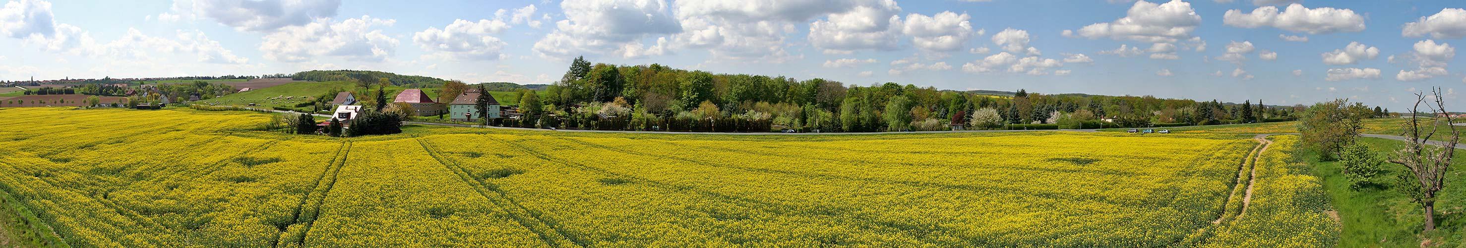 Rapsfeld und das Gebiet wo die Grünfinken und andere wohnen