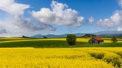 Rapsfelder im Fuldaer Land