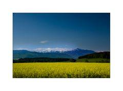 Rapsgelb und Berge